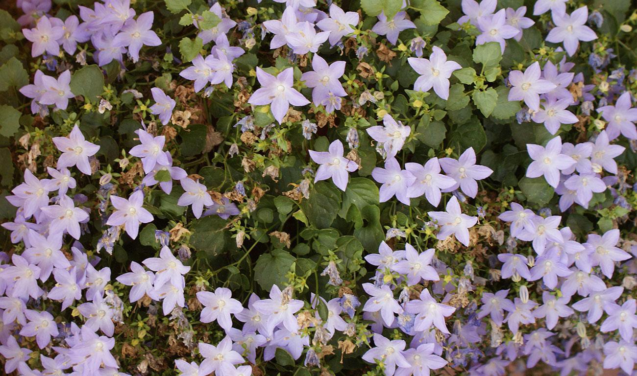 B&B L'Aquila del Parco - I fiori del giardino